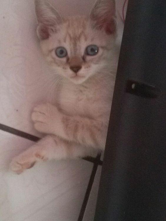 Meu gato. Nome : Doce de Leite