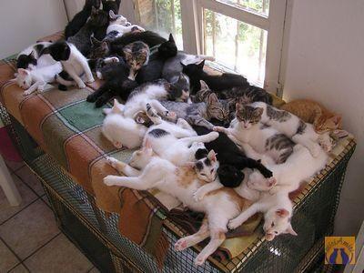 Kitty hoarding! :)