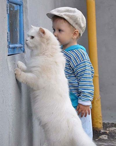 Cat and boy to the rescue
