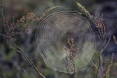 Kunstwerk der Natur