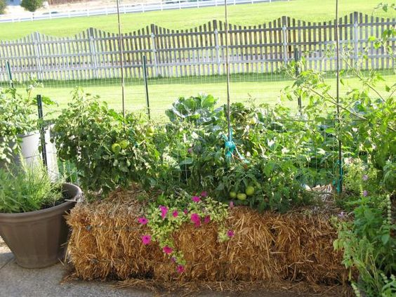 A Straw Or Hay Bale Garden Is A Gardening Method Used For