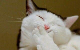 Lachende Katze