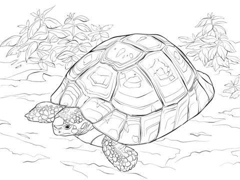 Schildkroten Ausmalbilder Turtle Painting Coloring Pages Coloring Books