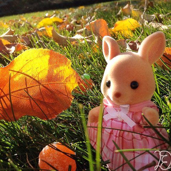 """""""It's the Fall, it's the Fall  it's the Fall!""""  #calicocritters #sylvanianfamilies #toys #autumn #fall #calicocritterdreams"""""""
