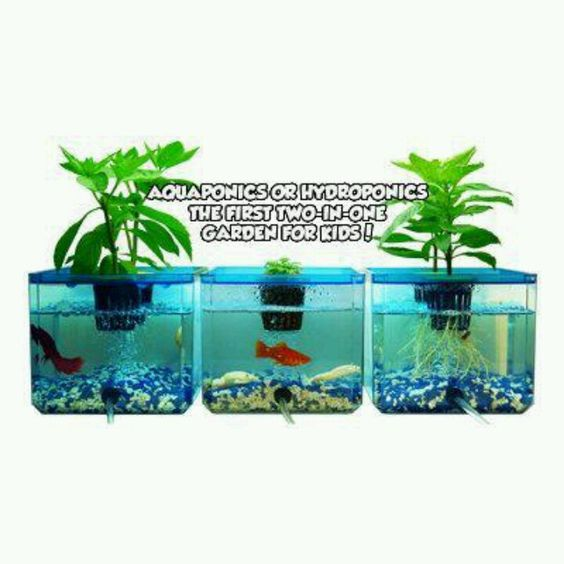Hydroponics veggies and fish on pinterest for Fish tank hydroponic garden