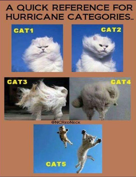 Cat hurricanes. Sooooo funny!!!! :):):)