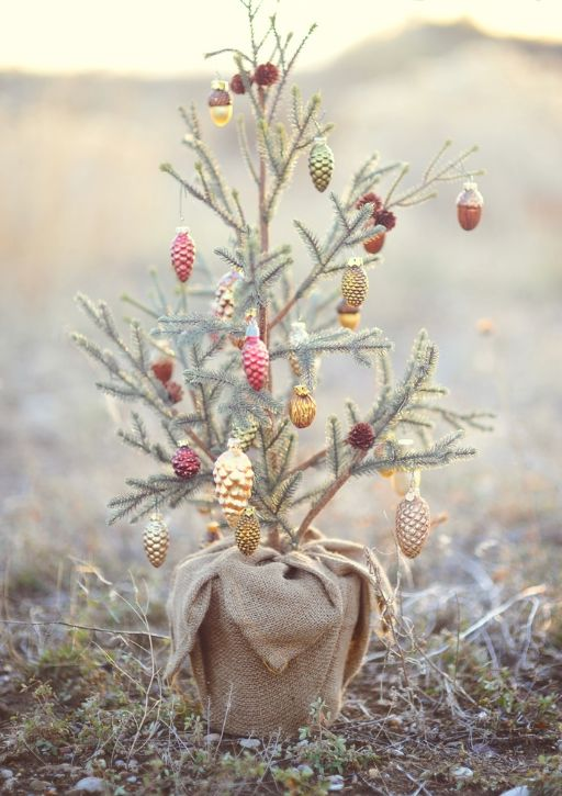 Sweet tiny Christmas tree in desert #holidayinspiration #pastels #christmastree