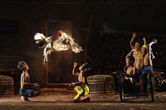 cockfighting by dewan irawan, via 500px