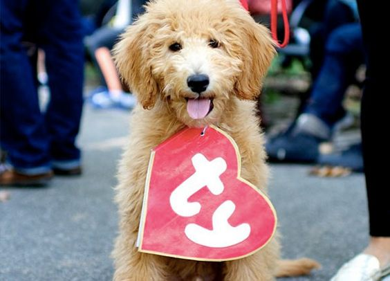 Dressing up your dog as a Beanie Baby has to be one of the best pet costumes ever!!