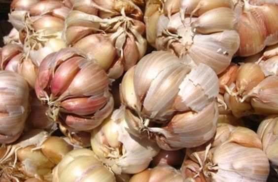 Bake your garlic in your terra cotta garlic roaster in a 350-degree oven for 45 minutes.