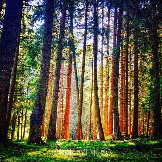 In cerca di fresco: weekend nei boschi Lombardi