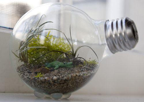How to make a tiny terrarium in a lightbulb