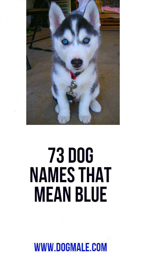 73 Dog Names That Mean Blue Dog Names Boy Dog Names Unique Blue Eyed Dog Names
