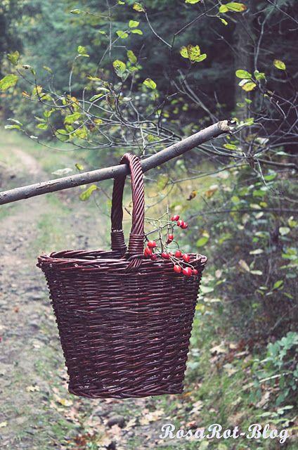basket: