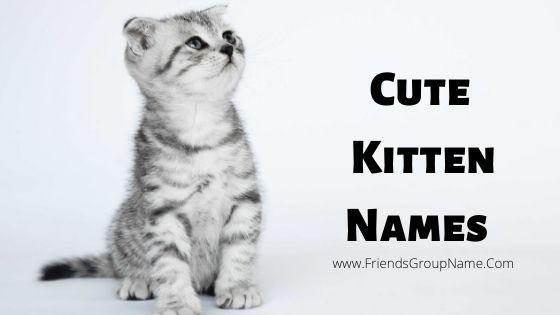 Cute Kitten Names 2020 Unique Famous Boy Girl Cat Names In 2020 Girl Cat Names Kitten Names Kittens Cutest