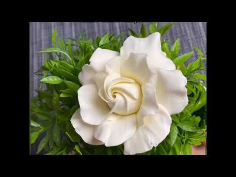 Diy Clay Flowers Tutorial Gardenia Flowers Air Dry Clay Cold Porcelain Sugarcraft Youtube In 2020 Clay Flowers Polymer Clay Flowers Polymer Clay Ornaments
