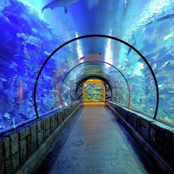 Shark Reef Aquarium - Mandalay Bay