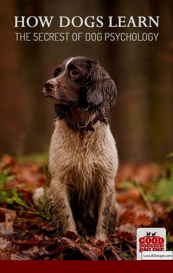 How To Train Your Dog Not To Bark At Noises And Pics Of How To Train Your Dog To Go To The Toilet Outside Tip 2 Dog Psychology Dog Training Dog