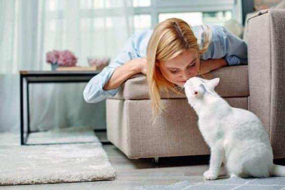 Por Qué Mi Gato Me Huele La Nariz Mascotas Bonitas Animal Doméstico Hechos De Gato