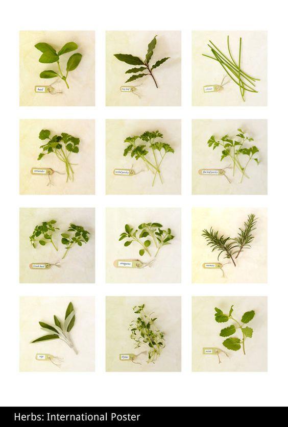 herbs herbs herbs