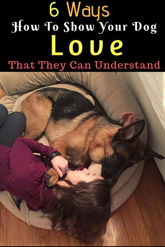 6 Ways To Show Your Dog Love That They Can Understand Dog Care