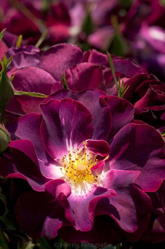 wunderschöner Park Blumen Arrangements Gestecke Sehenswürdigkeiten