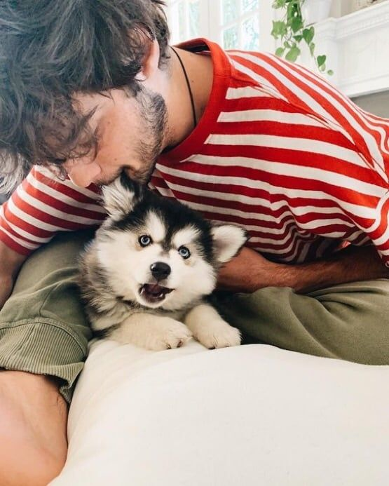 This is: the cutest sh*t Ive seen dogs love animals pets
