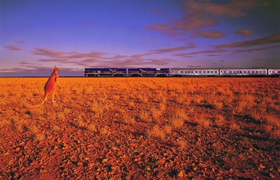 Spot Kangaroos from your window on the Indian Pacific
