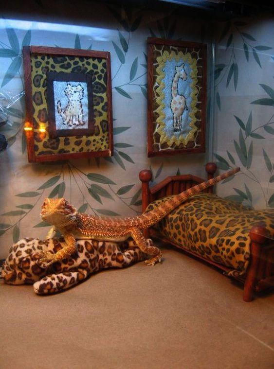 Amazing Bearded Dragon For Sale Nj D Bearded Dragon Vivarium