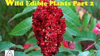 edible medicinal plants - YouTube