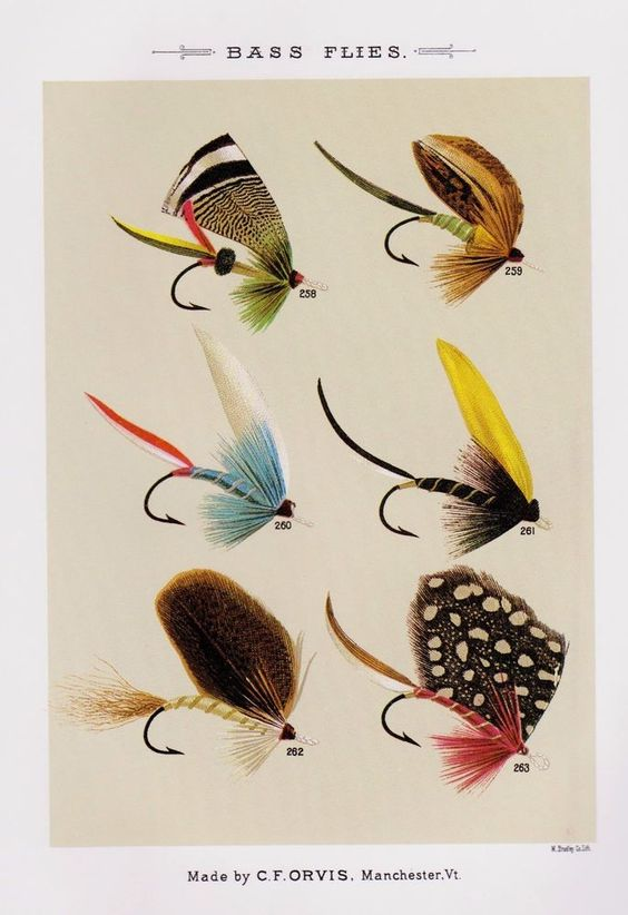 vintage fly fishing print bass fishing flies gallery wall art, Fly Fishing Bait