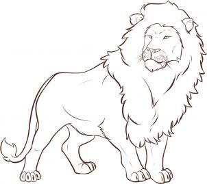 pin by kaitlin on drawing pinterest lion illustration and illustrations