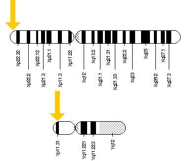 how to know which arm of chromosome gene is on