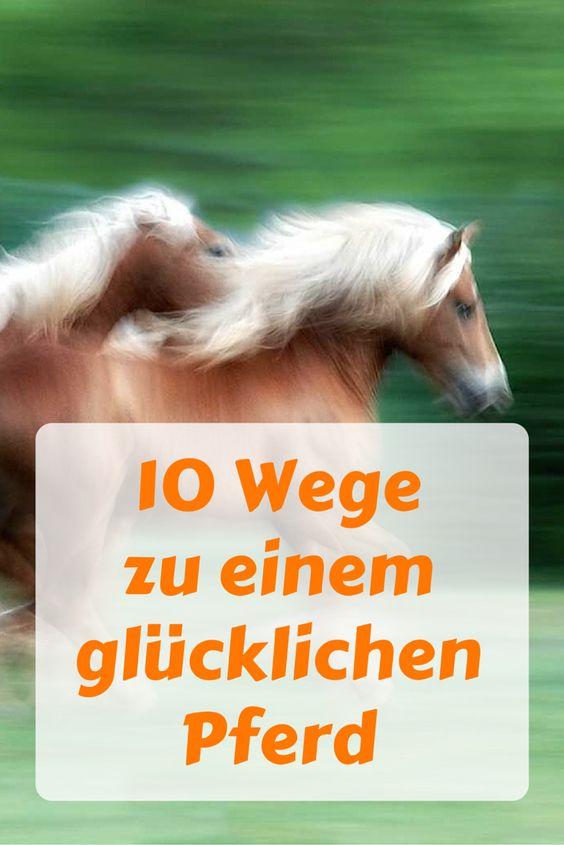 Was kannst Du tun, Deinem Pferd das Leben schöner zu machen? Finde es heraus! #pferde #reiten