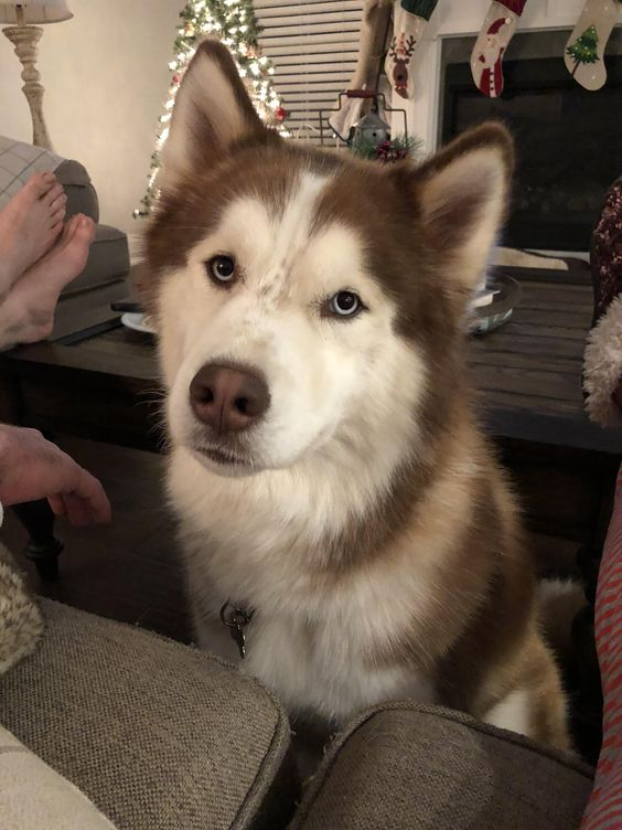Funny Cute Puppies Cute Husky Puppies Cute Dogs Puppies Cute Dogs