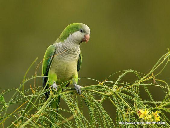 perroquet vert dessin - Recherche Google