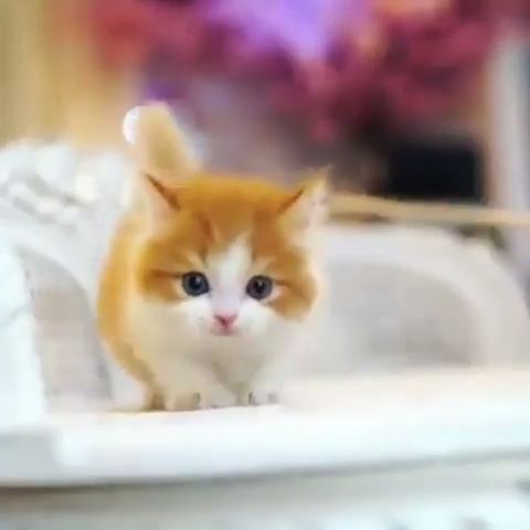 Cute Ginger Baby Cat Cute Animals Baby Cats Cute Cats