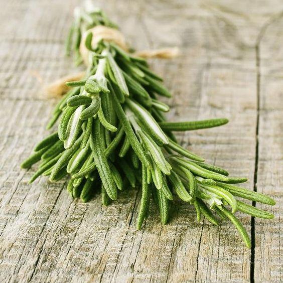 Como plantar alecrim. O alecrim é uma erva aromática que tem um grande número de propriedades benéficas. É muito utilizado na cozinha para conferir aroma e sabor a vários pratos, assim como também se usa como repelente de ...:
