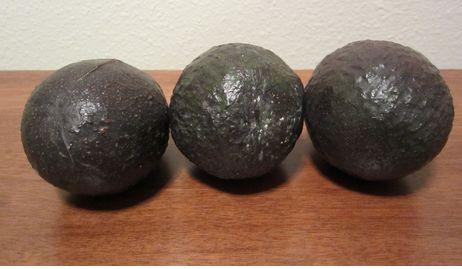 The Great Green Avocado! 5 simple recipes