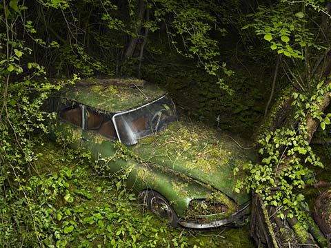 Abandoned cars overrun by nature