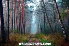 Resultado de imagen para frases sobre paisajes naturales