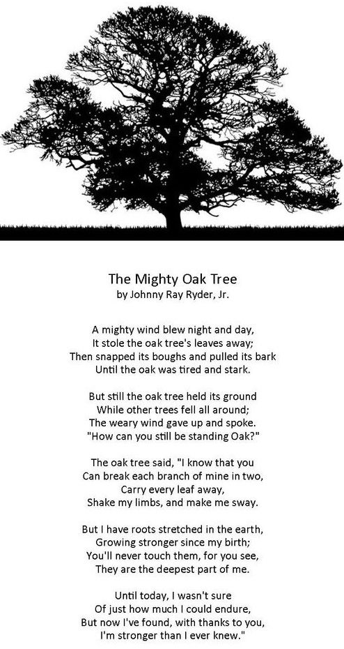 Pin By Anthony Detente On Faith Inspiration Day For Night Mighty Oaks Autumn Trees