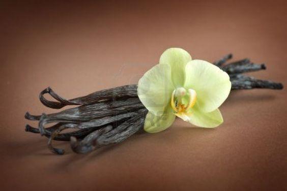 How to grow vanilla beans.. http://lifestyle.iloveindia.com/lounge/how-to-grow-vanilla-4279.html
