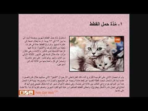بيتس جوت ويب لشراء وبيع الحيوانات الأليفة تقدم لكم مدة حمل القطط Petsgotweb Art Pandora Screenshot Decor