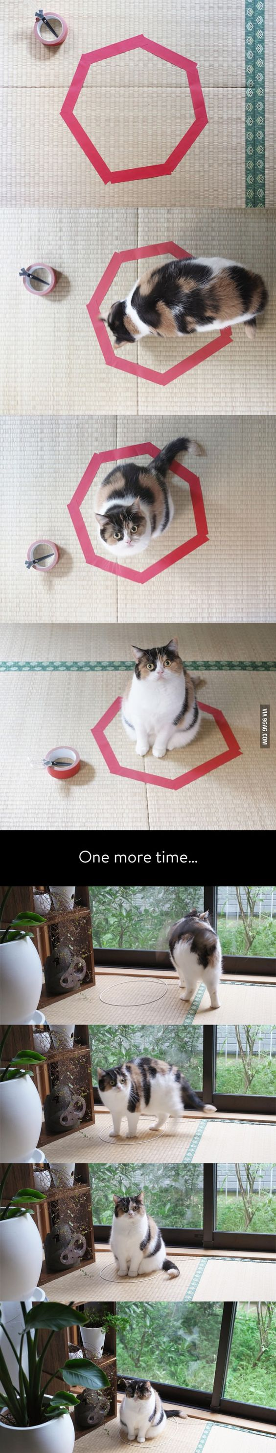How to catch a cat in 15 seconds