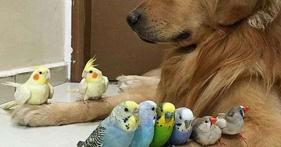 Hamsters, A dog and Best friends on Pinterest