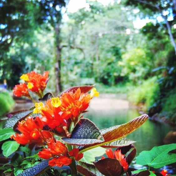 Life's a journey. Make some stops along the way!  #elizabethkoh #thailand www.elizabethkoh.com #chiangmai #travel #adventure #lifesajourney #garden #flower #jungle #wander #ekinthailand