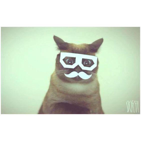 Dub step Cat :P