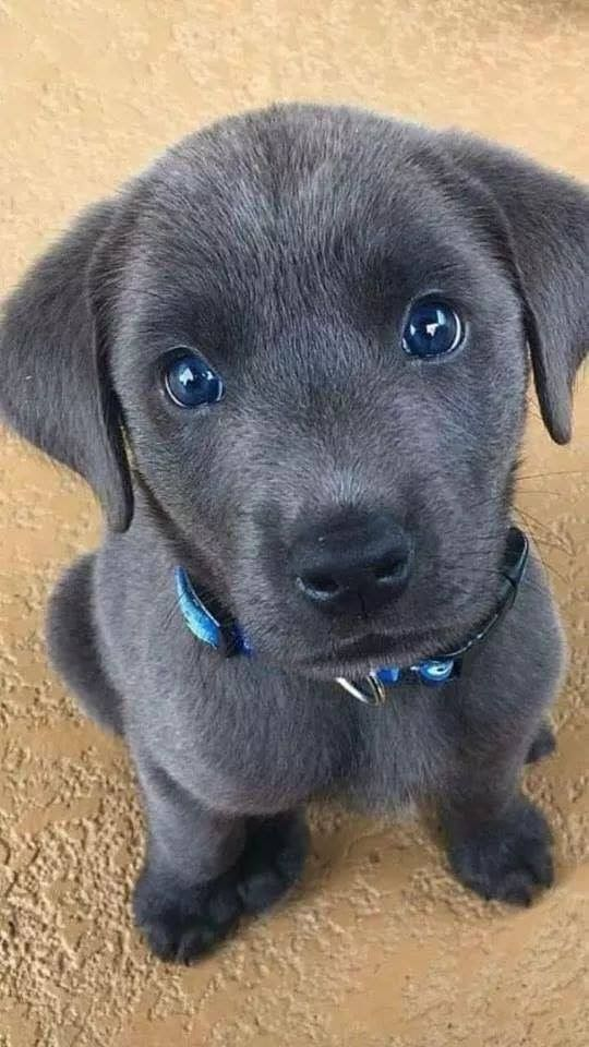 65 Baby Animals That Can Fill Your Heart With Joy Cute Dogs