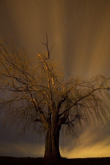 The Shining Tree  By: Yan Zhang